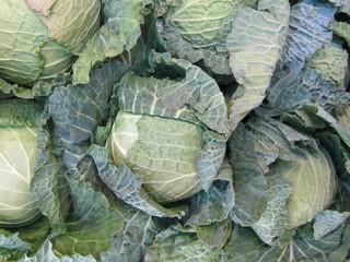 Col repollo, cabbage.