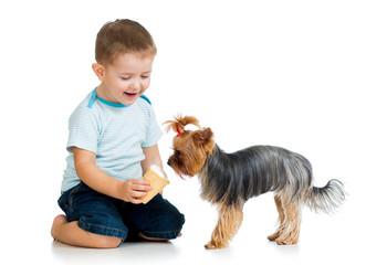 boy kid feeding dog isolated on white background