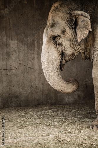 Fototapeta azjatycki - duży - Dziki Ssak