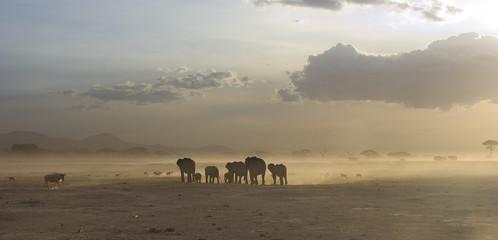 Elefanti in macia al tramonto