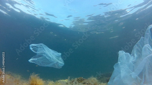 Nylon bags and fishes