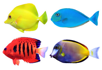 Set of tropical sea fishs