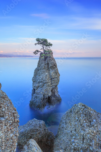 Portofino park. Pine tree rock cliff. Liguria, Italy