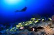 Taucher mit Korallenriff