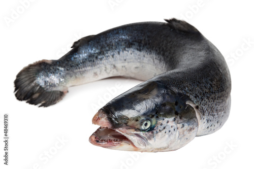 Salmon isolated on white