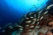 Fischschwarm im Korallenriff