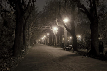 Park alley by night