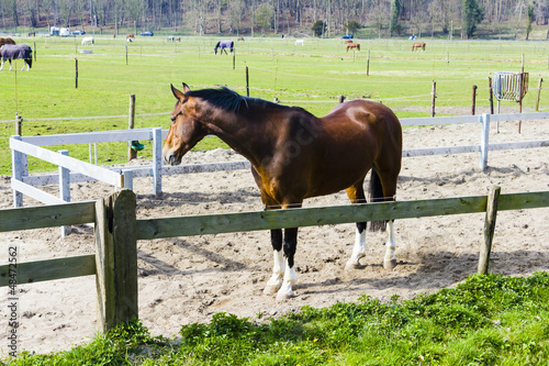 Beautiful bay horse behind a farm fence