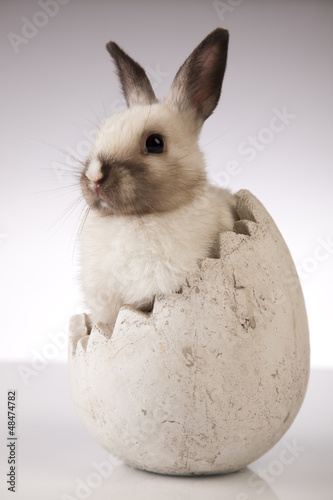 Little rabbit on white background