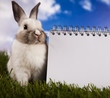 Copyspace blank paper and bunny