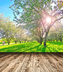 Bright beautiful light blooming rural apple trees alley