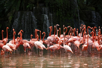 Flamingoes and waterfall