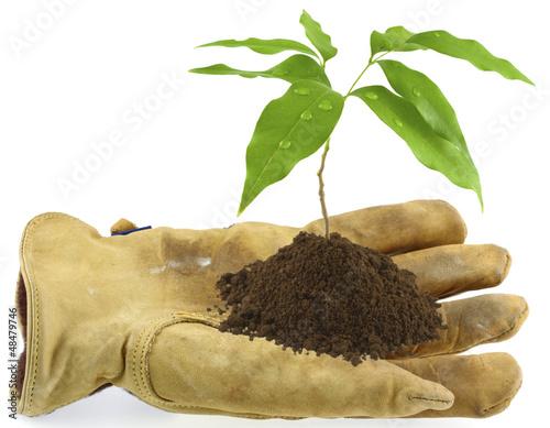 gant de cuir tenant un jeune arbre