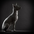 Mexican xoloitzcuintle dog