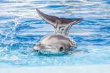 Fototapeta akwarium - Atlantyku - Wodny Ssak