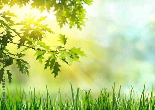 Lichtstimmung - Blätter im Gegenlicht