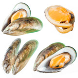 Set of Mussel isolated on white. Collection