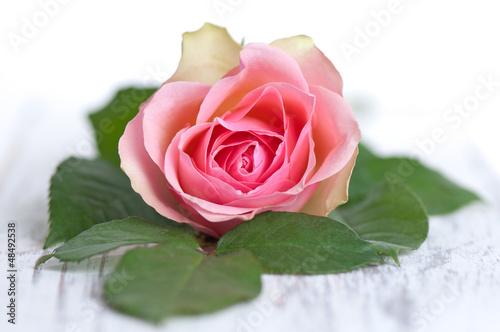 Rose mit grünen Blättern auf Holz