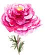 Quadro Beautiful Peony flower