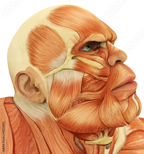 male super muscle close up face