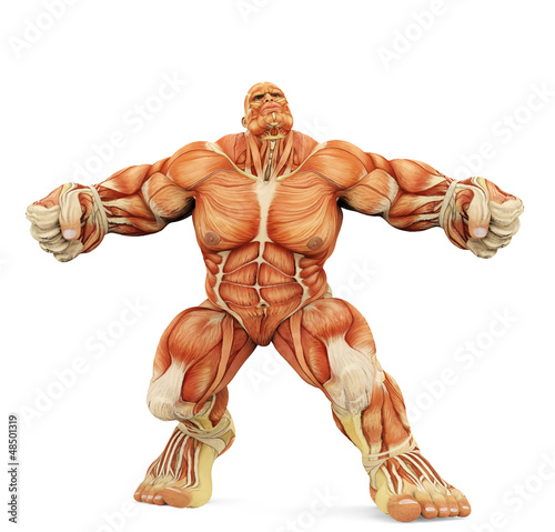 male super muscle