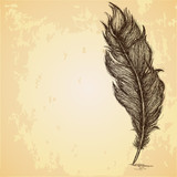 Sketch of the feather on grungy texture