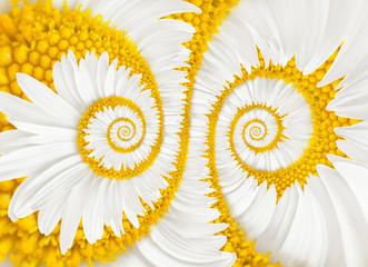 chamomile flower infinity spiral