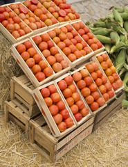 tomatoes boxes