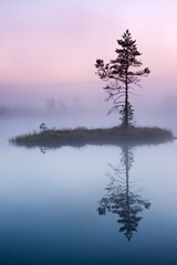 Tree on an isle in misty morning