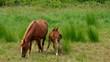 Pferd vid 02