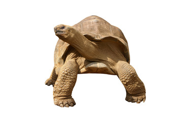 Gian Tortoise to use for retouche