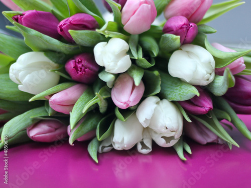 Tulpen weiß und Lila