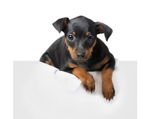 Dog hold empty pape