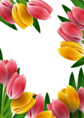 Tulips design template or background