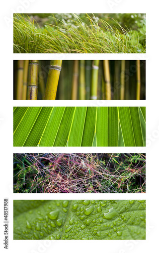 Jardin, nature, végétation, printemps, vert, plante, végétal