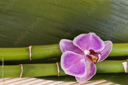 Fototapeten,blume,blume,pflanze,natur