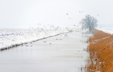 Ducks flying over a snowy countryside