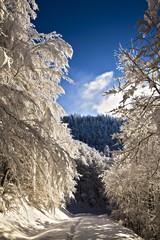 Chemin de randonnée en montagne sous la neige