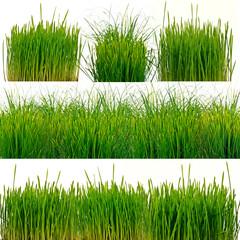 Grünes Gras, freigestellt vor weißem Hintergrund
