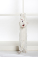 Kätzchen erklettert Regal