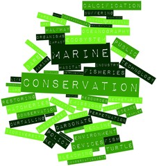 Word cloud for Marine conservation
