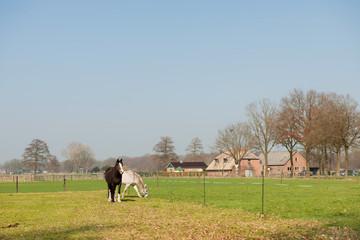Horses in meadows