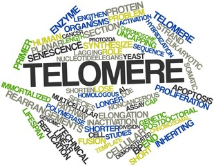 Word cloud for Telomere