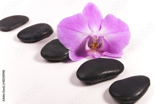 Stones and orchid