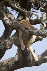 Sleeping on tree