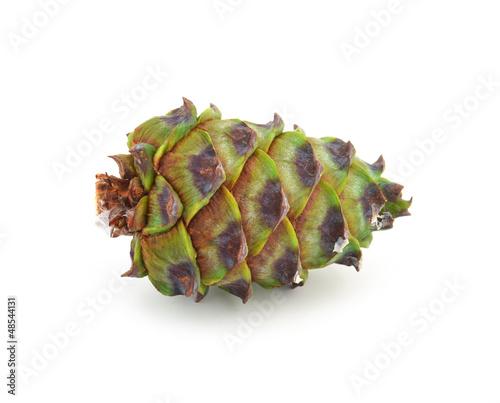 green cedar cone
