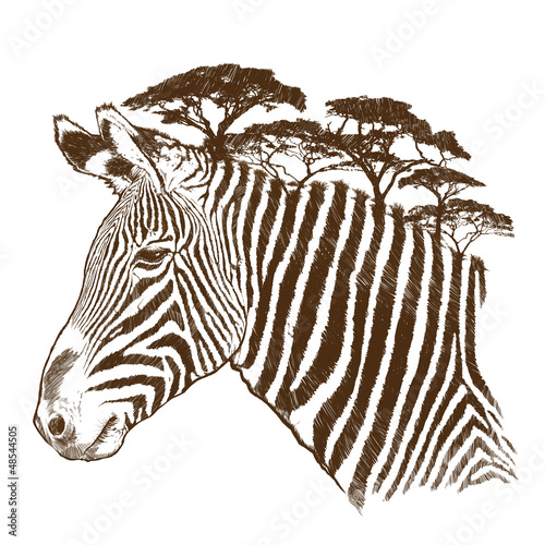 Zebra with tree