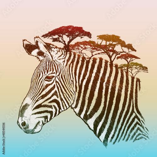 Fototapeta Evening savanna zebra