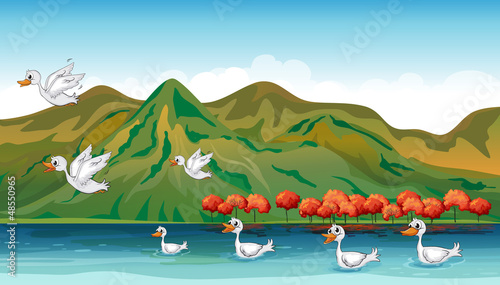 Tuinposter Rivier, meer Ducks in quest of food