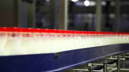 many bottles of milk move by conveyor belt at creamery